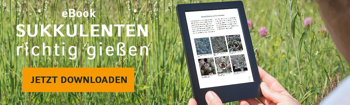 eBook Warenkorb