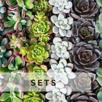 Sukkulenten-Sets & Mixe