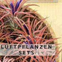 Luftpflanzen-Sets
