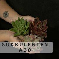 Abo/Sukkulenten-Club