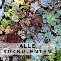 Alle Pflanzen