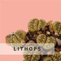 Lithops usw.
