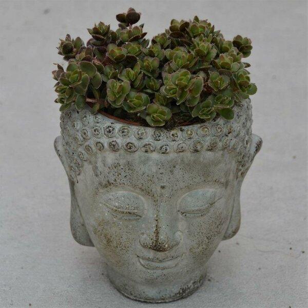 Kopf Pflanzgefäß Siam für 8,5cm Sukkulenten