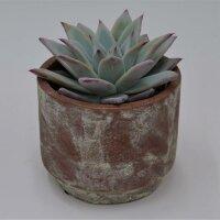 Keramik Übertöpfe 3er Set: mauve-gold, grau- gold, burgund- gold, passend für 10,5cm Sukkulenten